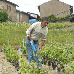 Alain LAPLACE vigneron coopérateur à Jullié