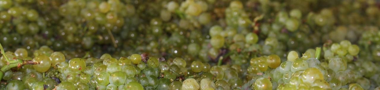 Nos Vins - Appellations du Mâconnais