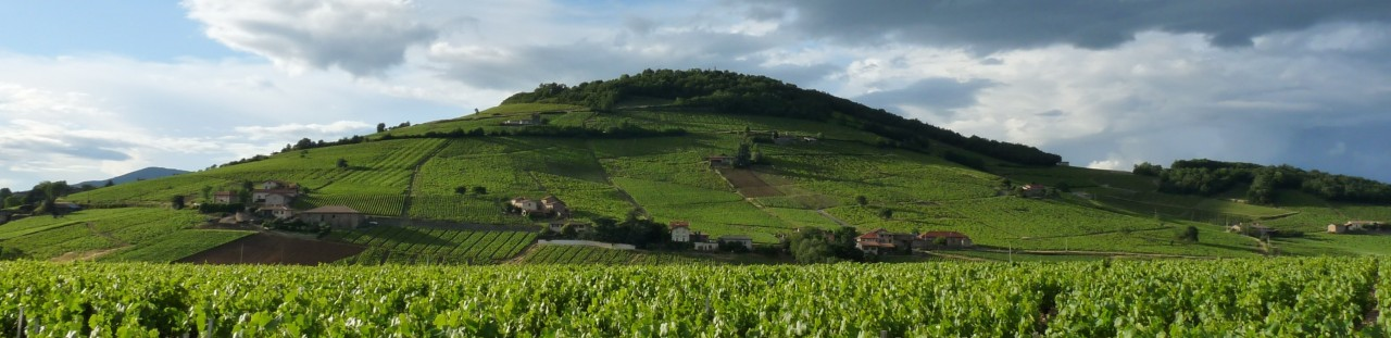 Notre Brouilly