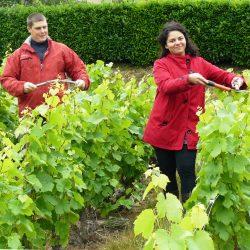 Sébastien et Nadia PIQUAND vignerons coopérateurs  à Juliénas
