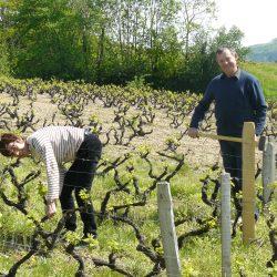 Nicole et Guy BODILLARD vignerons coopérateurs à Juliénas
