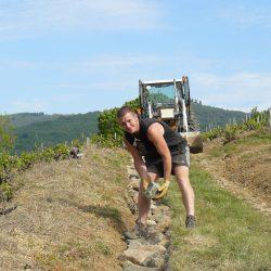 Mathieu DAILLY vigneron coopérateur à Juliénas